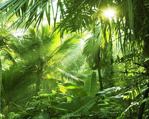 Bild zum Artikel Der tropische Regenwald – die grüne Lunge der Erde