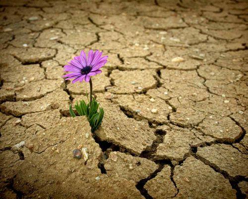 Bild zum Artikel Resilienz